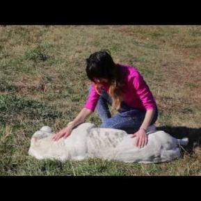 Embedded thumbnail for Питомник собак. Нам тело лечат доктора, собаки лечат души!