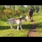 Embedded thumbnail for Белый Лекарь Парнас